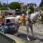 Antalya_Pferdekutsche