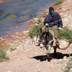 Mann auf Esel