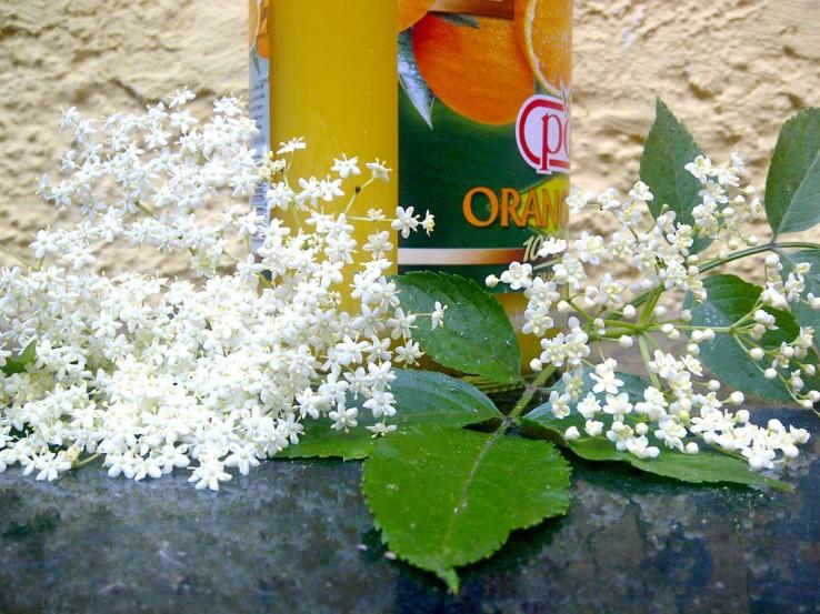 Holunderblüte mit Osaft