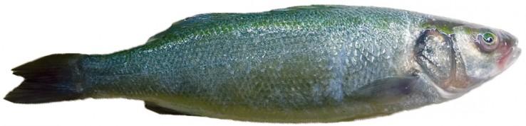fischsuppe4